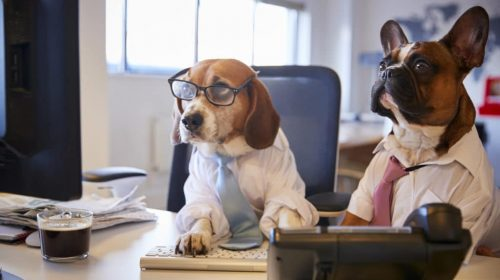 2-dogs-working